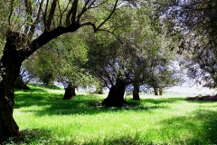 Olivenhain auf dem Monte Poro