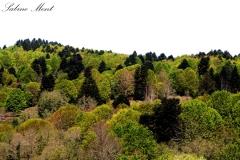 Wald im Serre-Regionalpark
