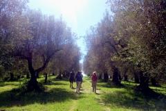 Uliveto - Olivenhain